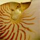 nautilus80.jpg